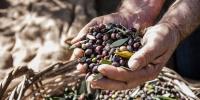 ABEA extra natives BIO Olivenöl aus Kreta 500ml