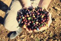 Handgemachte kretische Bio-Olivenölseife mit Honig & Thymian von HELLEO